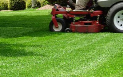 Lawn Care, Lawn Mowing, Grass Cutting, Lawn Maintenance, Lawn Care Business